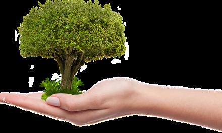 mehr Bäume für's Klima