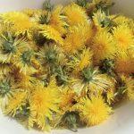 Löwenzahn-Blütensirup/-Honig